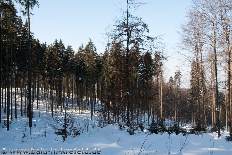 20100208frauenau03