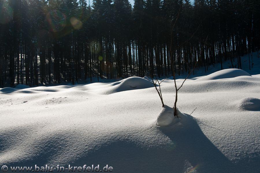 20100208frauenau13
