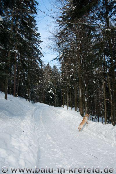 20100209frauenau12