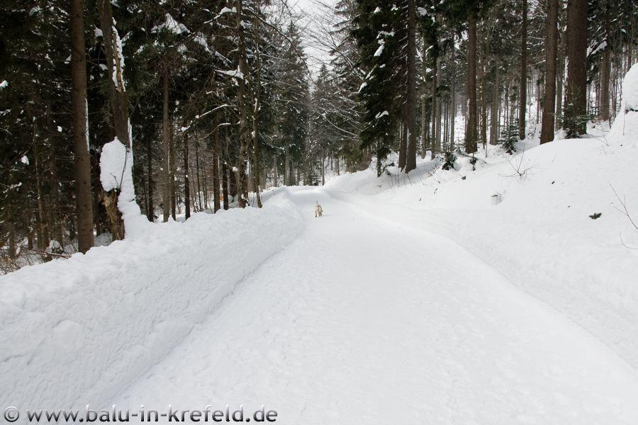 20100209frauenau29