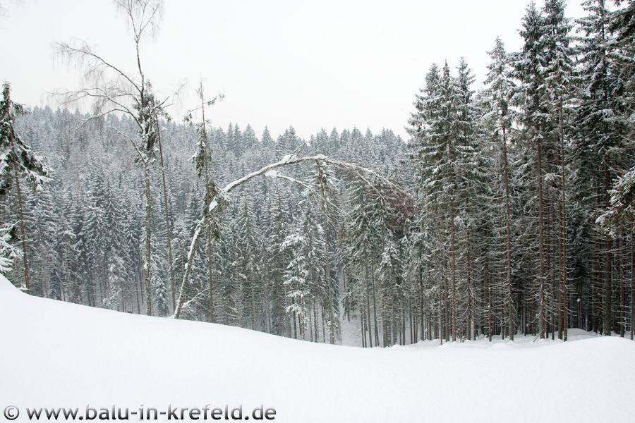 20100211frauenau07