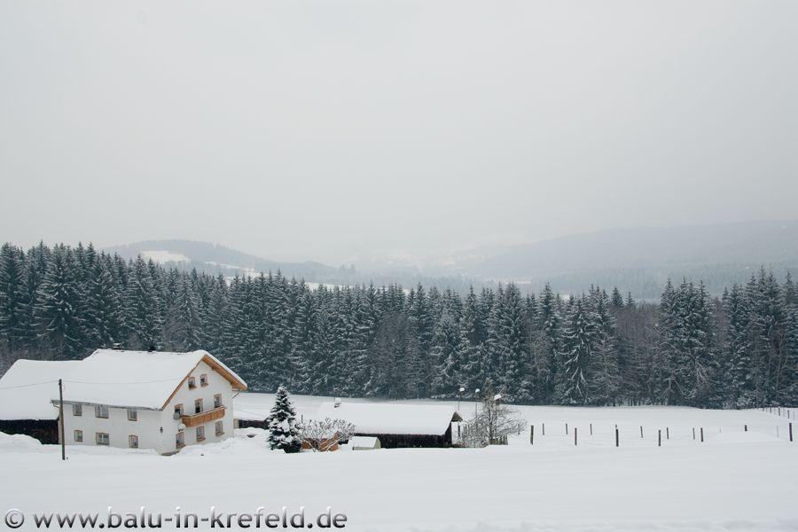 20100211frauenau10