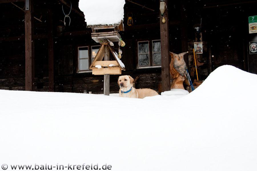 20100211frauenau11