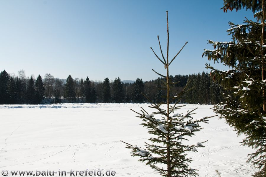 20100216frauenau12