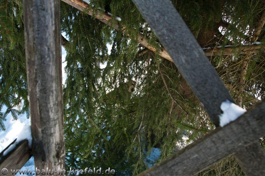 20100216frauenau22