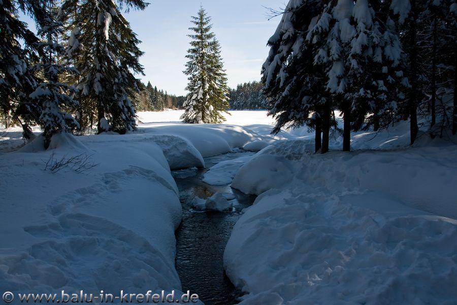 20100217frauenau15